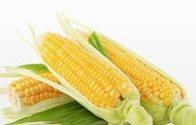 Recette canadienne : Épis de maïs