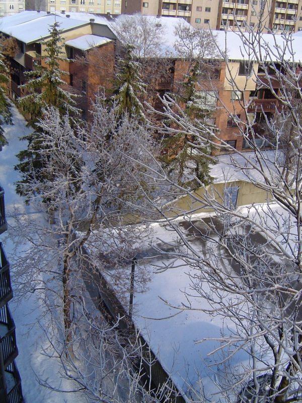 La vue du balcon : des arbres gelés