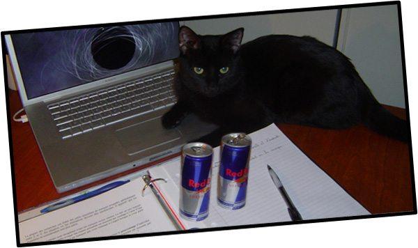 Elvis (le chat de Cindy) révise le cours de marketing avec moi !