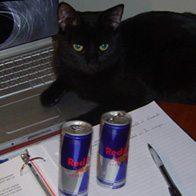 Décembre 2010 : fini le stress des exam !