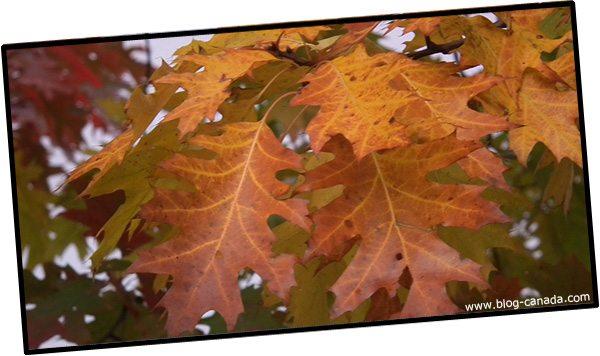 Photo de l'automne canadien à Ottawa (Ontario, Canada)