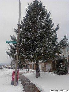Les premières neiges 2011 à Ottawa