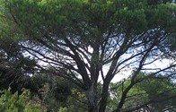 Un arbre planté pour Blog Canada !