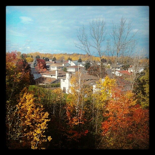 Vue depuis la fenêtre de ma chambre au Canada (1)