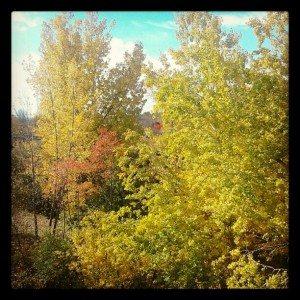 Vue depuis la fenêtre de ma chambre au Canada (2)