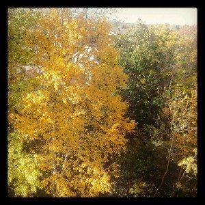 Vue depuis la fenêtre de ma chambre au Canada (3)